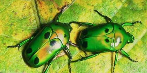 Les insectes savent survivre ! Les insectes n'ont pas d'oreilles