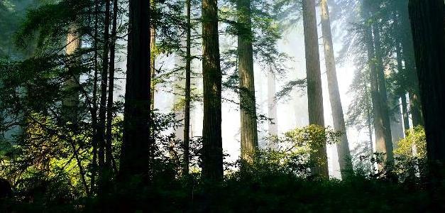 Stage survie forêt 3 et 4 jours