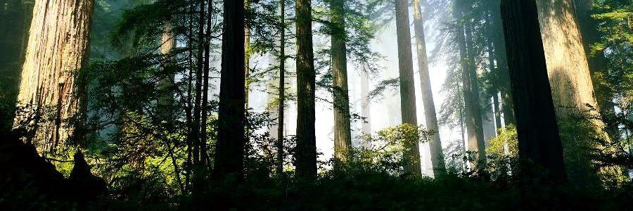 Stage survie forêt 4 jours