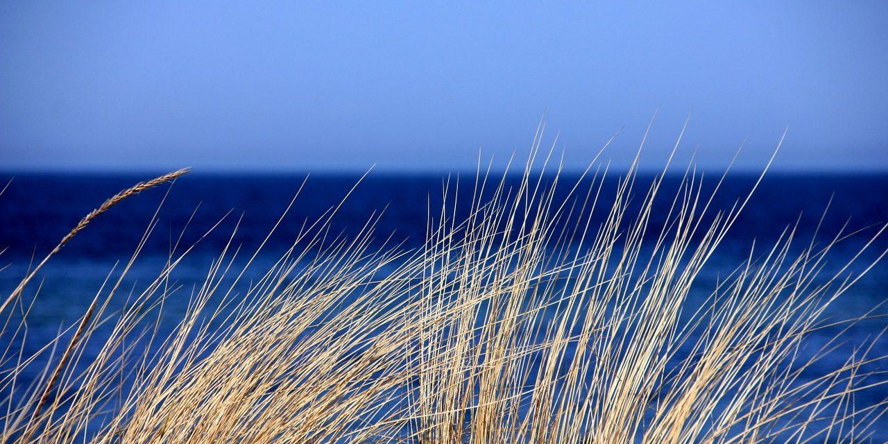 Promenade dans les dunes, les prés salés et la lande